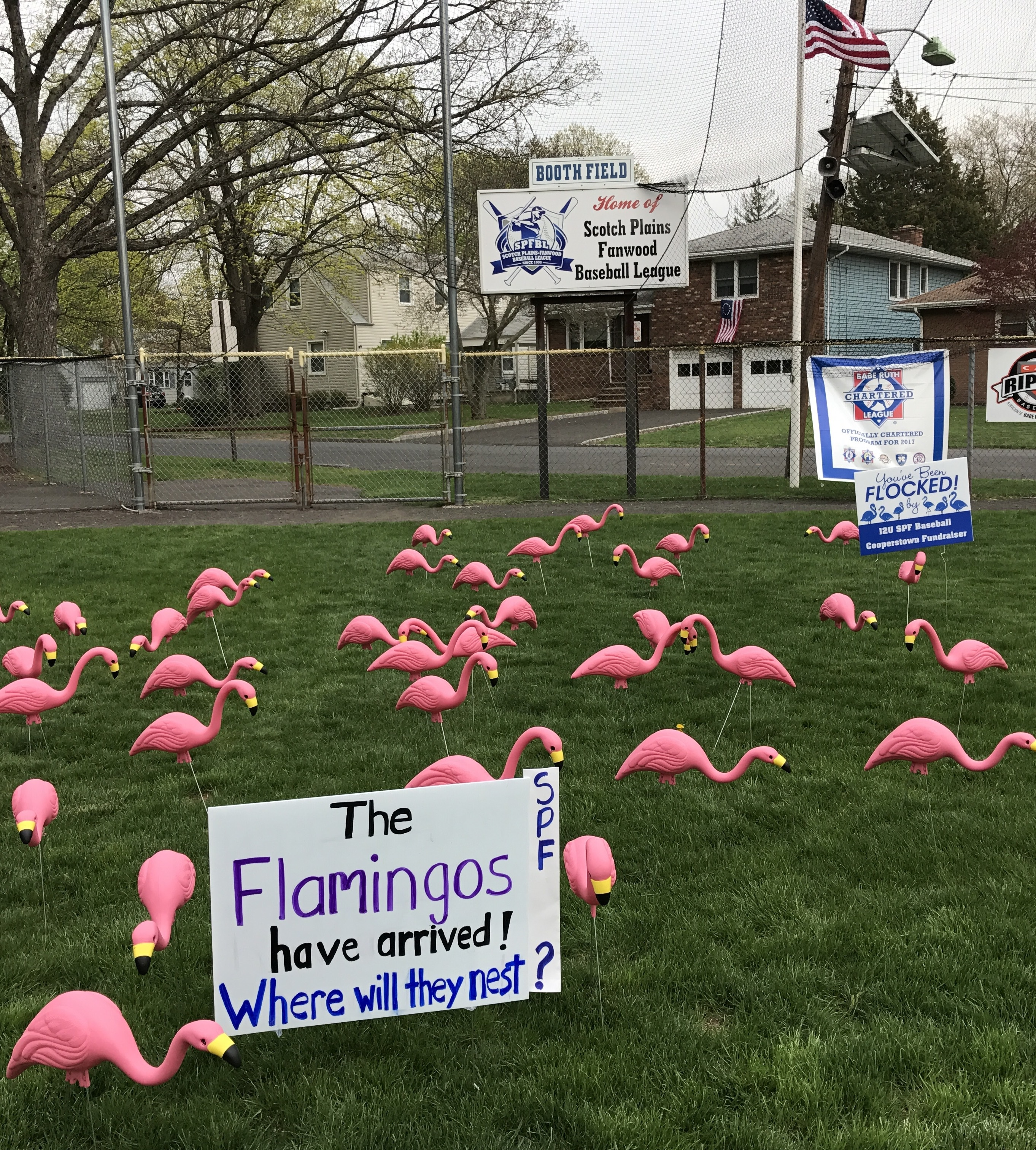 Flamingos are back!